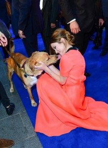 Emily Browning and Tom Hardy's dog Woody at the U.K. film premiere of Legend held at Odeon cinema, Leicester Square, London on September 3, 2015.
