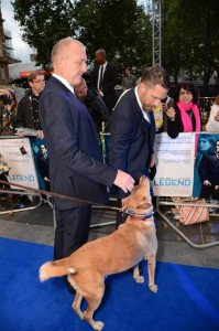 Tom Hardy brings his dog Woody to the U.K. film premiere of Legend held at Odeon cinema, Leicester Square, London on September 3, 2015.