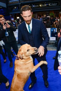 Tom Hardy and his dog Woody at the U.K. film premiere of Legend held at Odeon cinema, Leicester Square, London on September 3, 2015.
